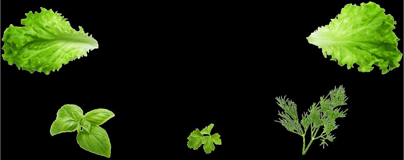 Kasvit kooste kuva