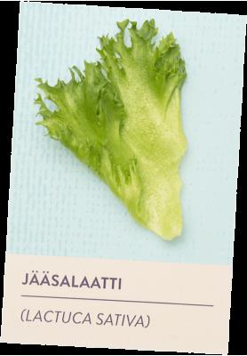 Jääsalaatti tuotekortti
